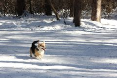 Dog in winter park stock photos