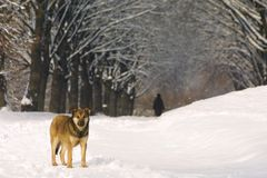 Dog on the winter parkway Stock Image