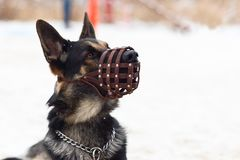Dog winter in a protective mask, muzzle royalty free stock images
