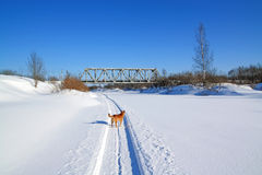 Dog on winter road Stock Image