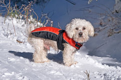 The dog in winter on snow Royalty Free Stock Image