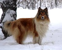 Dog in winter snow stock photos