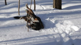 Dog in the Winter snow stock video