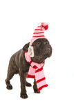 Dog in winter time Royalty Free Stock Photography