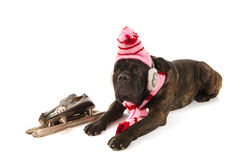 Dog in winter time Royalty Free Stock Images
