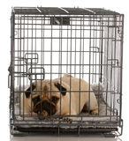 Dog in a wire crate Stock Image
