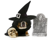 Dog witch Royalty Free Stock Images