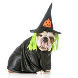 Dog witch Stock Photos