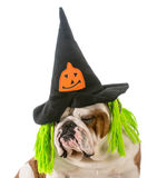 Dog witch Royalty Free Stock Photos