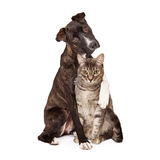 Dog With Arm Around Cat Stock Photo