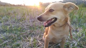 Free Dog With Sun Set Stock Images - 119702134