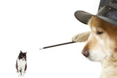 Dog Wizard. Enchanting a poor Persian cat stock images