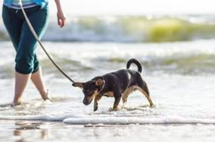Dog with woman near sea water Royalty Free Stock Photography