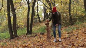 Dog and woman owner playing in autumn park stock footage