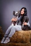 Dog and woman Stock Image