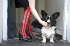 Dog at woman`s legs Stock Photos