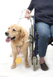Dog won a golden medal. A dog has won a golden medal isolated on white Stock Photo