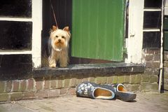 Dog and wooden shoes Stock Photo