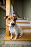 A dog Royalty Free Stock Photography