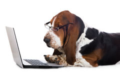 Dog working on a computer Stock Image