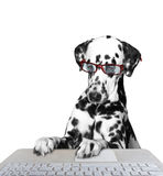 Dog working on the computer. Isolated on white background stock image