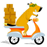 Dog working in the delivery. Pet character scooter driver with b. Oxes. Vector illustration with working dog in delivery servise Royalty Free Stock Photography