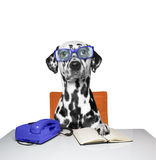 Dog works as a manager in the office. The dog works as a manager in the office Stock Image