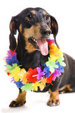Dog in a wreath from flowers Stock Images