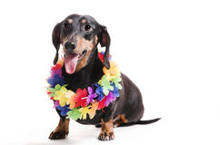 Dog in a wreath from flowers stock photo