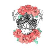 Dog with wreath of red flowers and green leaves. Cute pug portrait. Vector illustration.  Royalty Free Stock Photography