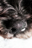 Dog& x27 στενός επάνω μύτης του s Στοκ εικόνες με δικαίωμα ελεύθερης χρήσης