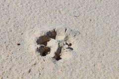 Dog& x27; след ноги s на песке Стоковые Изображения RF