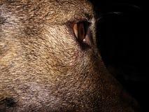 dog& x27; belleza de s Foto de archivo libre de regalías
