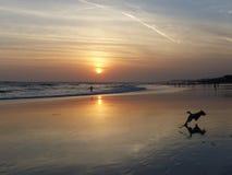 Dog& x27 s που απολαμβάνει το ινδονησιακό ηλιοβασίλεμα Στοκ εικόνες με δικαίωμα ελεύθερης χρήσης