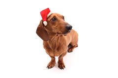 Dog with xmas hat Stock Photography