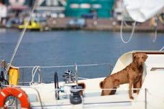 Dog on yacht royalty free stock photography