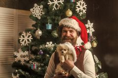 Dog year winter holiday and xmas. Christmas man with beard on happy face and pet. santa claus man with pet at tree. New year of dog, guy hold puppy. Party stock images