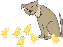 Dog and yellow chicks Royalty Free Stock Photography
