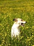 Dog (195) Stock Photo