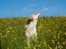 Dog (200) Stock Images