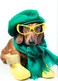 Dog in yellow glasses Stock Photo