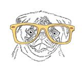 Dog with yellow glasses. Cute pug portrait. Vector sketch illustration. Dog with yellow glasses. Cute pug portrait. Vector sketch illustration Stock Images