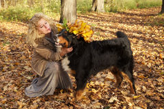 Dog in yellow leaves crown. Woman puts crown from yellow leaves on her dog Stock Photos