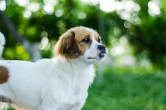 The dog. A yellowish-white in the park and with a heart-shaped pattern on the puppy Stock Photography