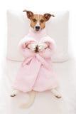 Dog yoga pose Stock Image