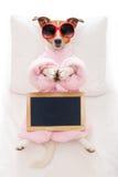 Dog yoga pose royalty free stock photos