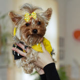 Dog Yorkshire terrier in the arms of mistr Royalty Free Stock Photos