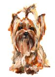 Dog Yorkshire Terrier. Yorkshire Terrier painted with acrylic paints on a white background Stock Photo