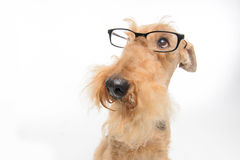 Dog is your best friend royalty free stock photos