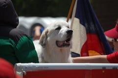 Dog03 Stock Image